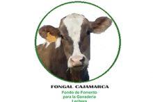 fongal-cajamarca