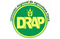 drap-piura